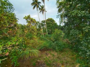 Tourism Suitable Land (54-perch) for Sale